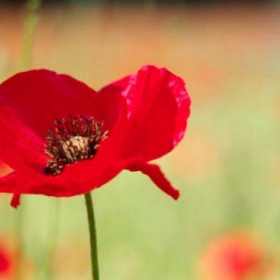 Norfolk Scouts Remembrance