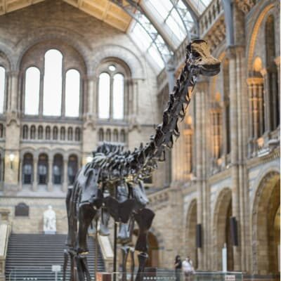 Dippy at the Cathedral